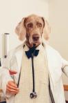 Dr Theodore Dalrymple: imperialist running dog